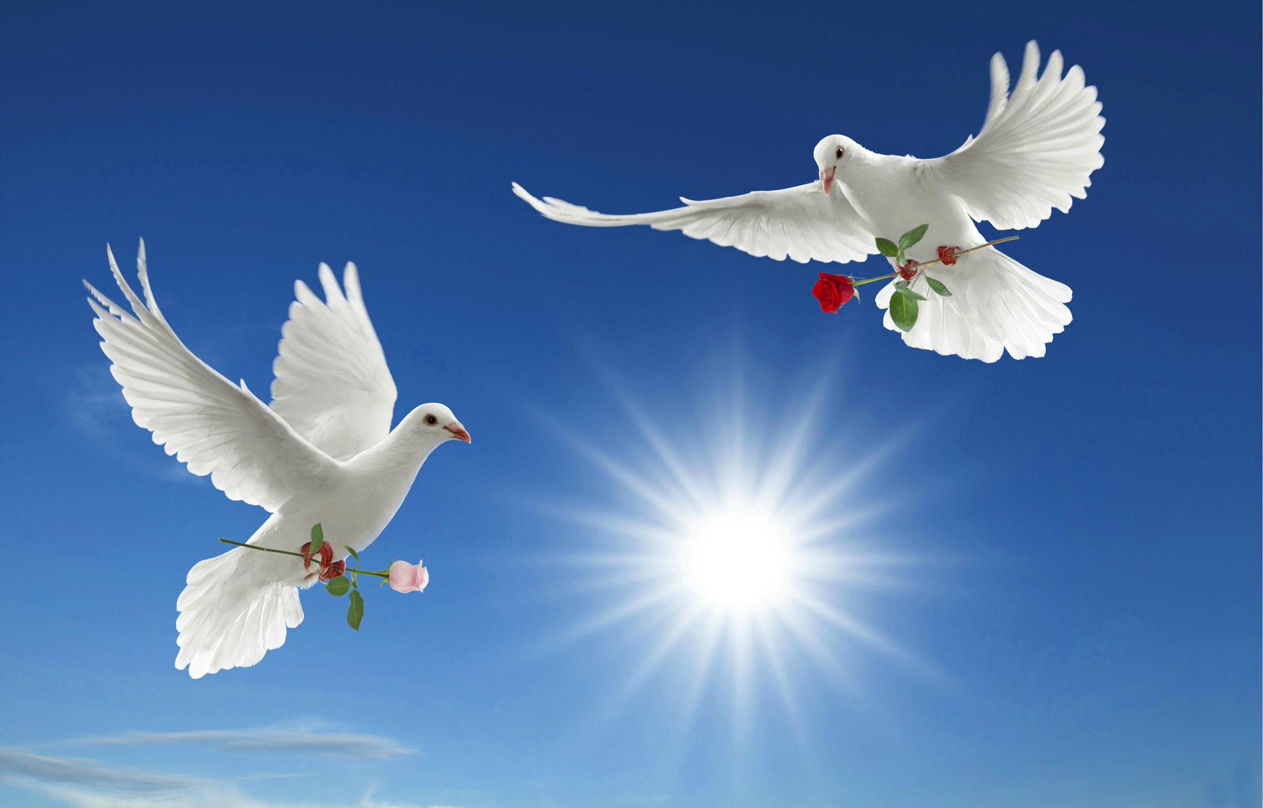 Preparing the Way – Peace